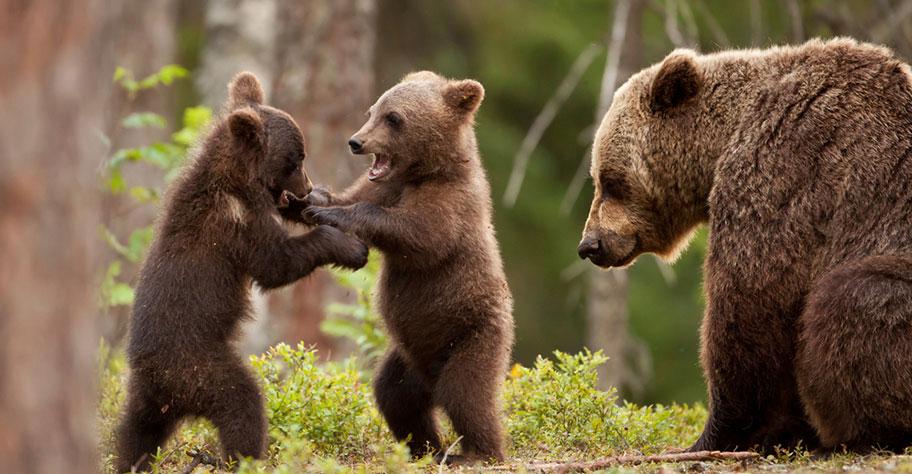 Lappland Reisen Bären Trekkings