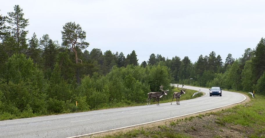 Finnland Strasse Elche Renntiere Rundreise günstig buchen