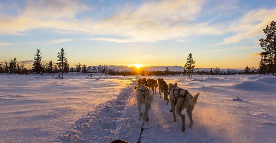 Hundeschlitten Touren Norwegen