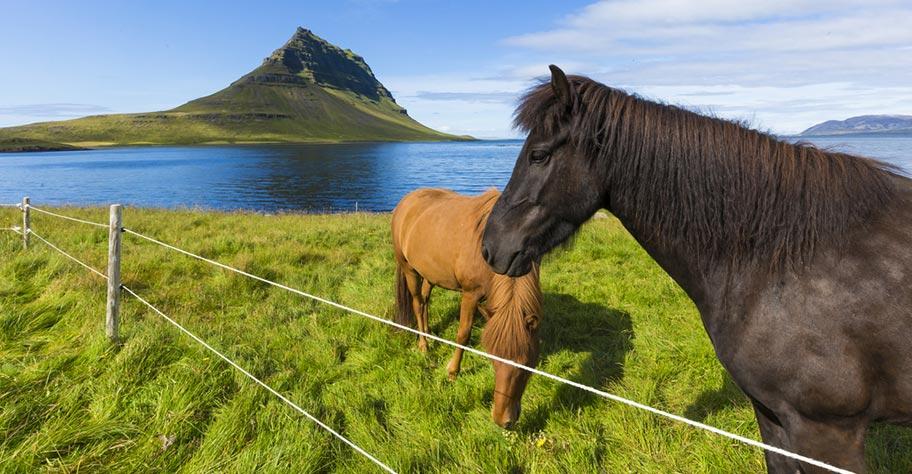 Island Pferde Reittouren Schweiz buchen