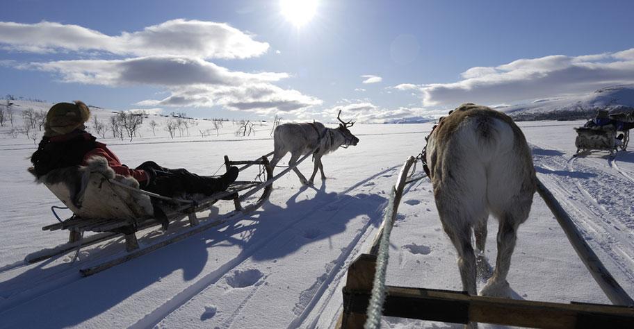 Lappland Rentier Touren buchen