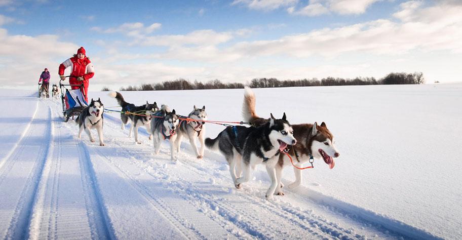 Lappland Schlittenhunde Kinder Erlebnisreisen