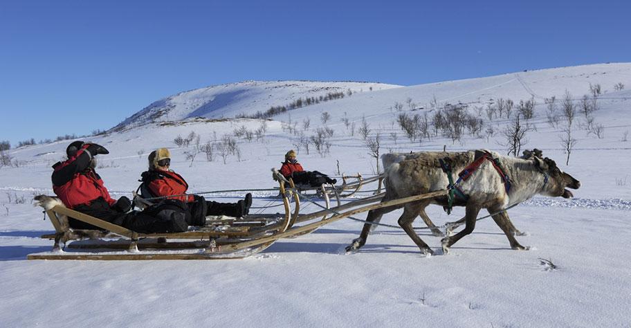 Rentiertouren in Lappland buchen