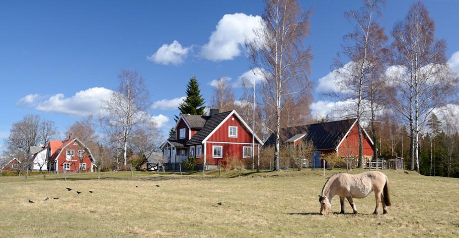 Schweden Ferien Pferde Reiten
